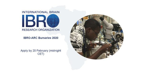 International Brain Research Organization African Regional Committee Ibro Arc Bursaries 2020 For Young African Researchers Scholarships For Excellence